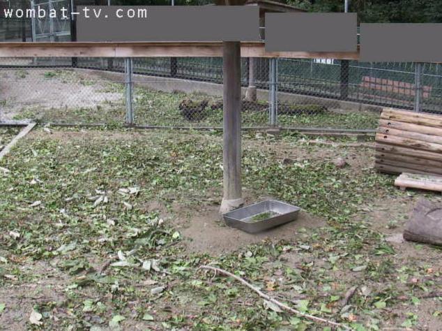 五月山動物園ウォンバット屋外第2ライブカメラ(大阪府池田市綾羽)