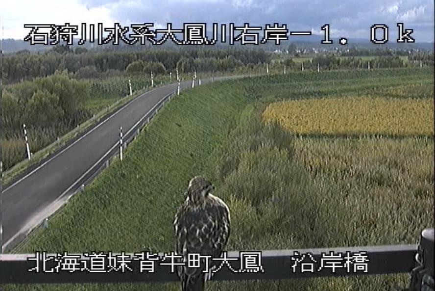 大鳳川沿岸橋ライブカメラ