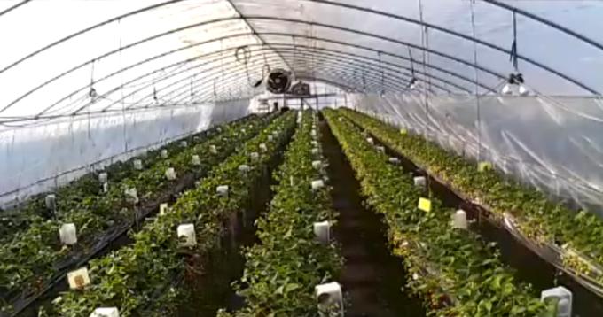 難波ファーム第1農場ライブカメラ(岡山県岡山市北区)