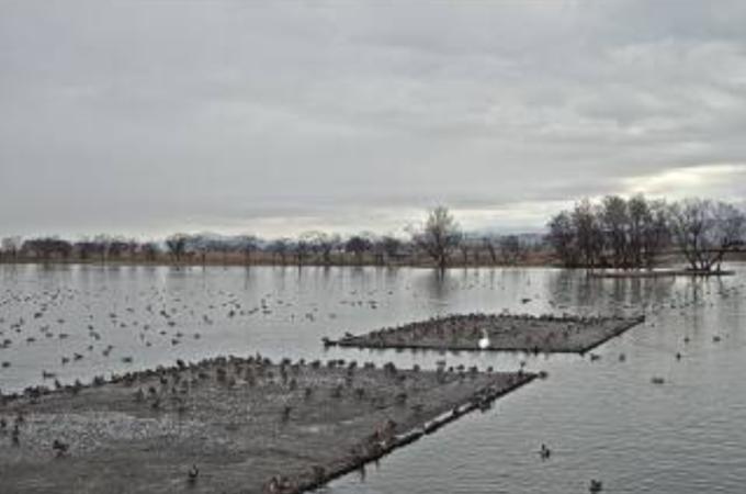 瓢湖第2ライブカメラ(新潟県阿賀野市水原)
