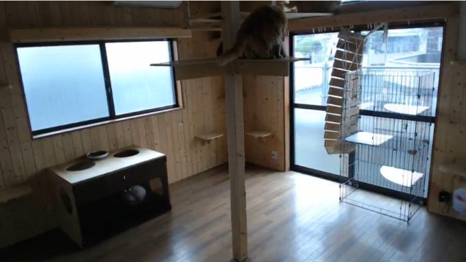 ココネコ猫舎ライブカメラ(福岡県飯塚市多田)