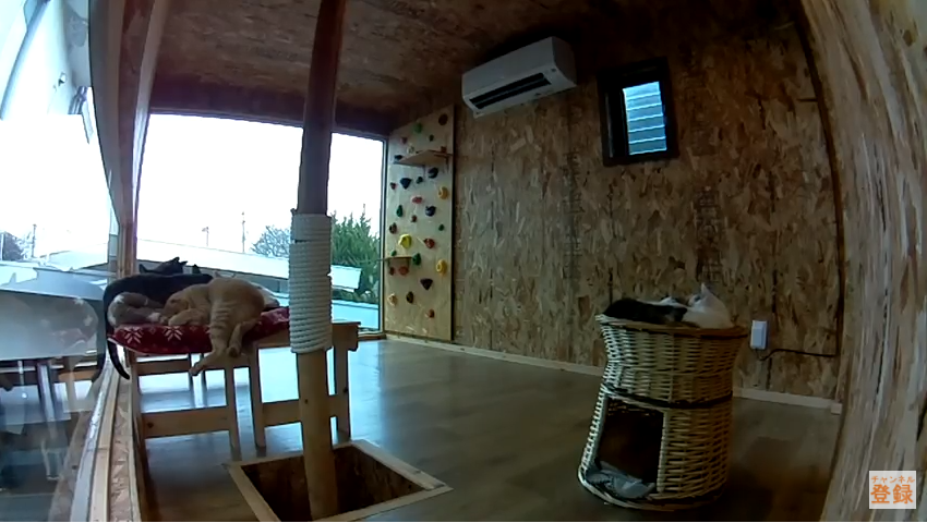 てしま旅館猫庭2Fライブカメラ(山口県山口市阿知須)