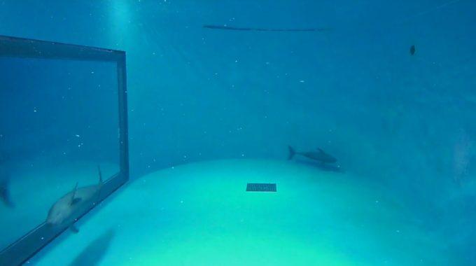 宮島水族館スナメリ水槽ライブカメラ(広島県廿日市市宮島町)