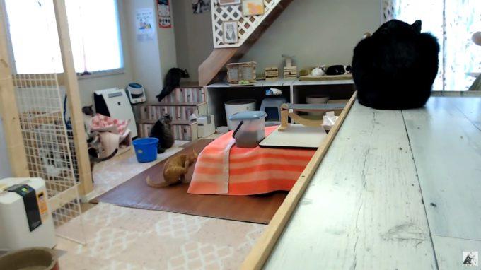 保護猫ハウス信州猫日和ライブカメラ(長野県長野市南県町)
