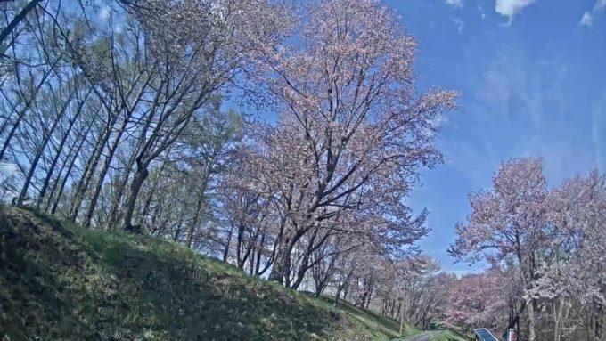 ないえさくら祭りライブカメラ(北海道奈井江町東奈井江)