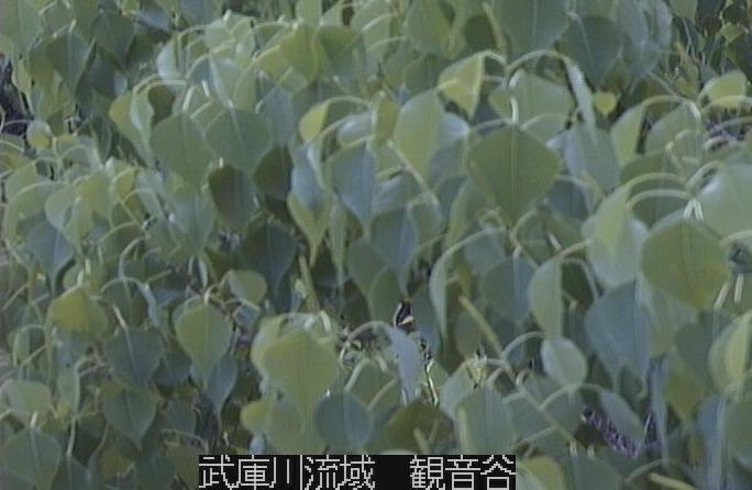 武庫川流域観音谷ライブカメラ(兵庫県西宮市塩瀬町生瀬)
