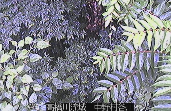 高橋川流域中野村谷川ライブカメラ(兵庫県神戸市東灘区)