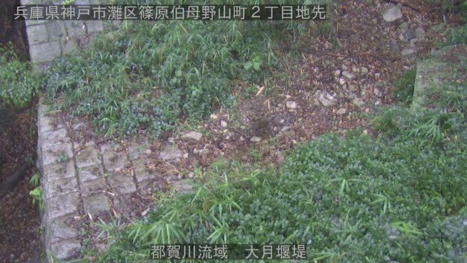 都賀川流域大月堰堤ライブカメラ(兵庫県神戸市灘区)
