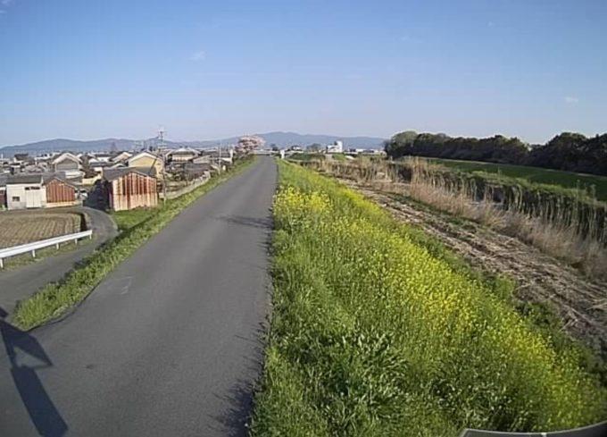曽我川大場ライブカメラ(奈良県三宅町小柳)