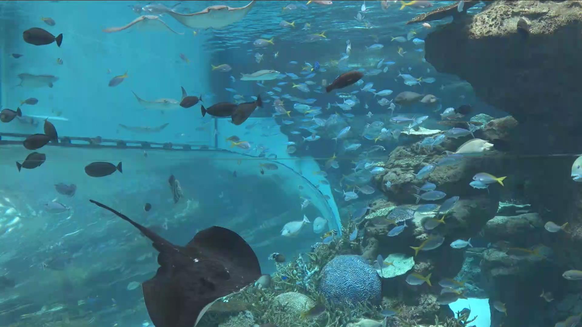 名古屋港水族館サンゴ礁大水槽ライブカメラ(愛知県名古屋市港区)