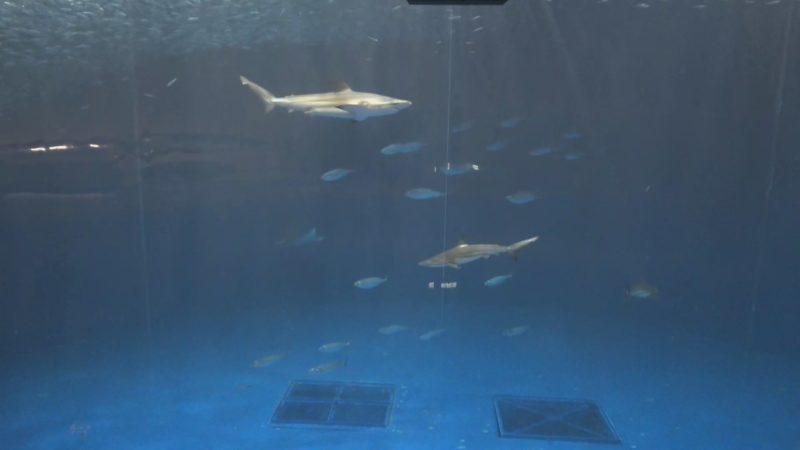 名古屋港水族館黒潮大水槽ライブカメラ(愛知県名古屋市港区)