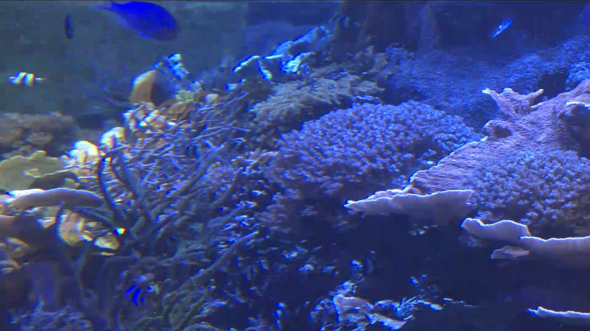 名古屋港水族館ライブコーラル水槽ライブカメラ(愛知県名古屋市港区)