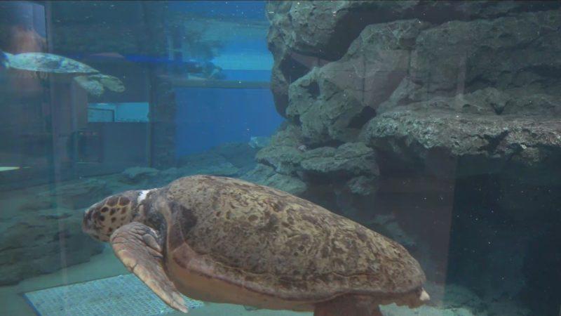 名古屋港水族館ウミガメ回遊水槽ライブカメラ(愛知県名古屋市港区)