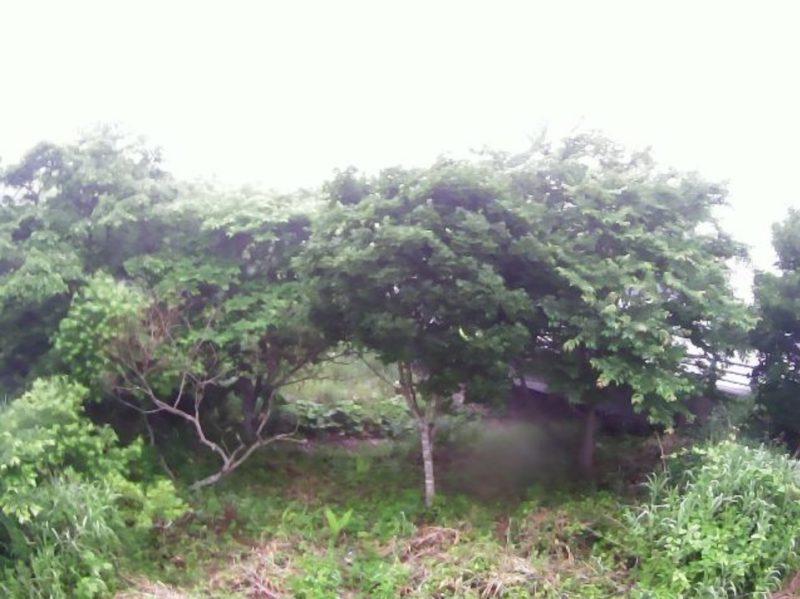 歌別川2.7KPライブカメラ(北海道えりも町歌別)
