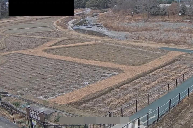 ときがわ花菖蒲園ライブカメラ(埼玉県ときがわ町玉川)