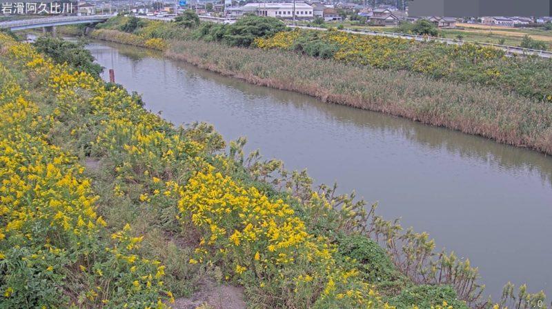 阿久比川岩滑ライブカメラ(愛知県半田市岩滑南浜町)