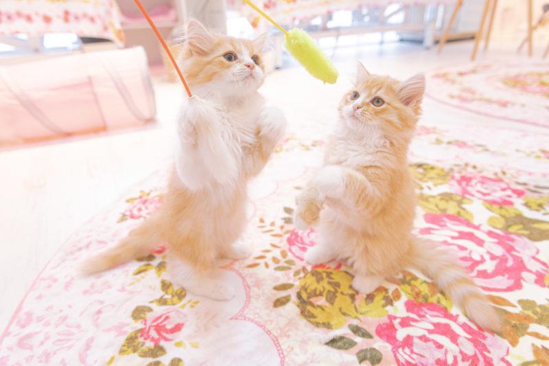 猫カフェライブカメラ一覧