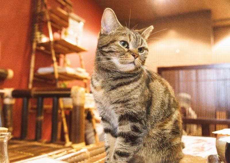 保護猫シェルターライブカメラ一覧