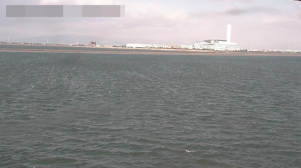 藤前干潟ライブカメラ(愛知県名古屋市港区)