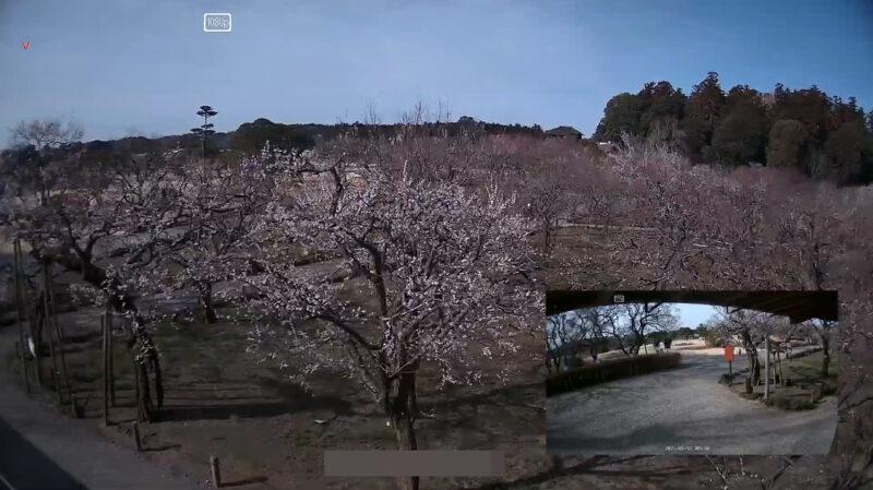 偕楽園東門ライブカメラ(茨城県水戸市見川)