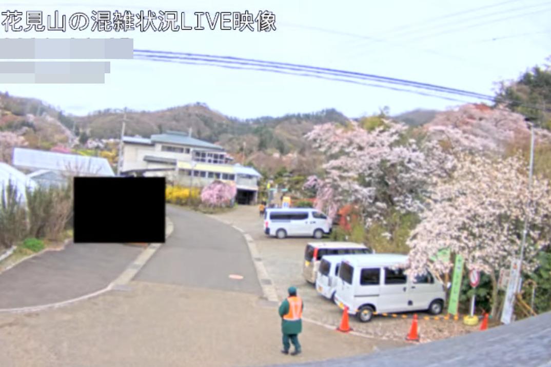 花見山公園混雑状況ライブカメラ(福島県福島市渡利)