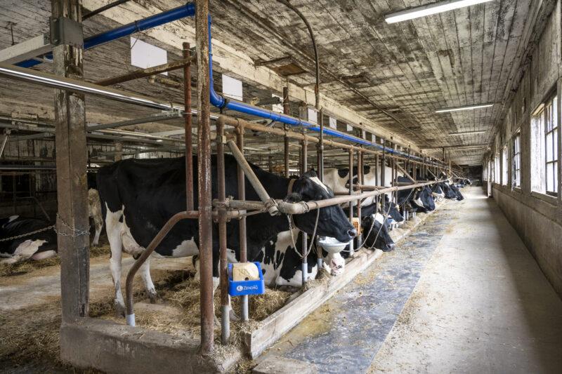 牛舎ライブカメラ一覧